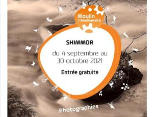 Affiche exposition SHIMMOR