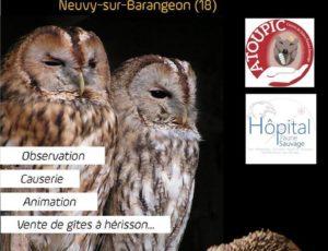 Nocturnes Hérissons et Rapaces