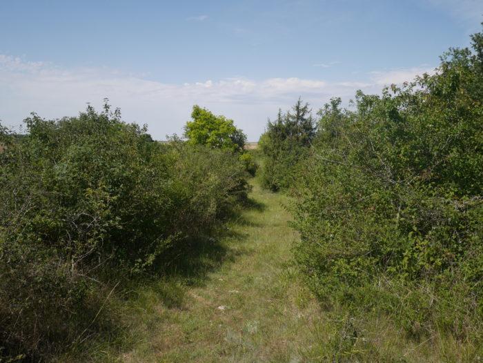 L'espace naturel sensible de la Pelouse de Grand Vau