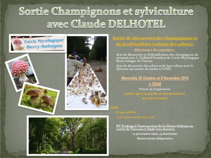 champignon-3